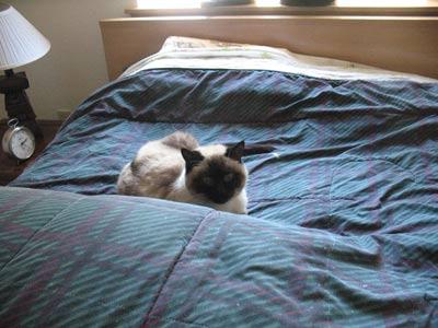 feline instincts success stories