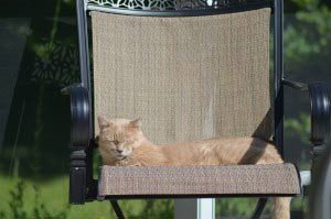 Caesar-on-chair-on-Lani-and-Around-the-garden-008-2-300x199