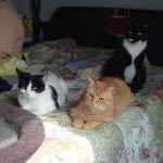 feline instincts raw meat cat food