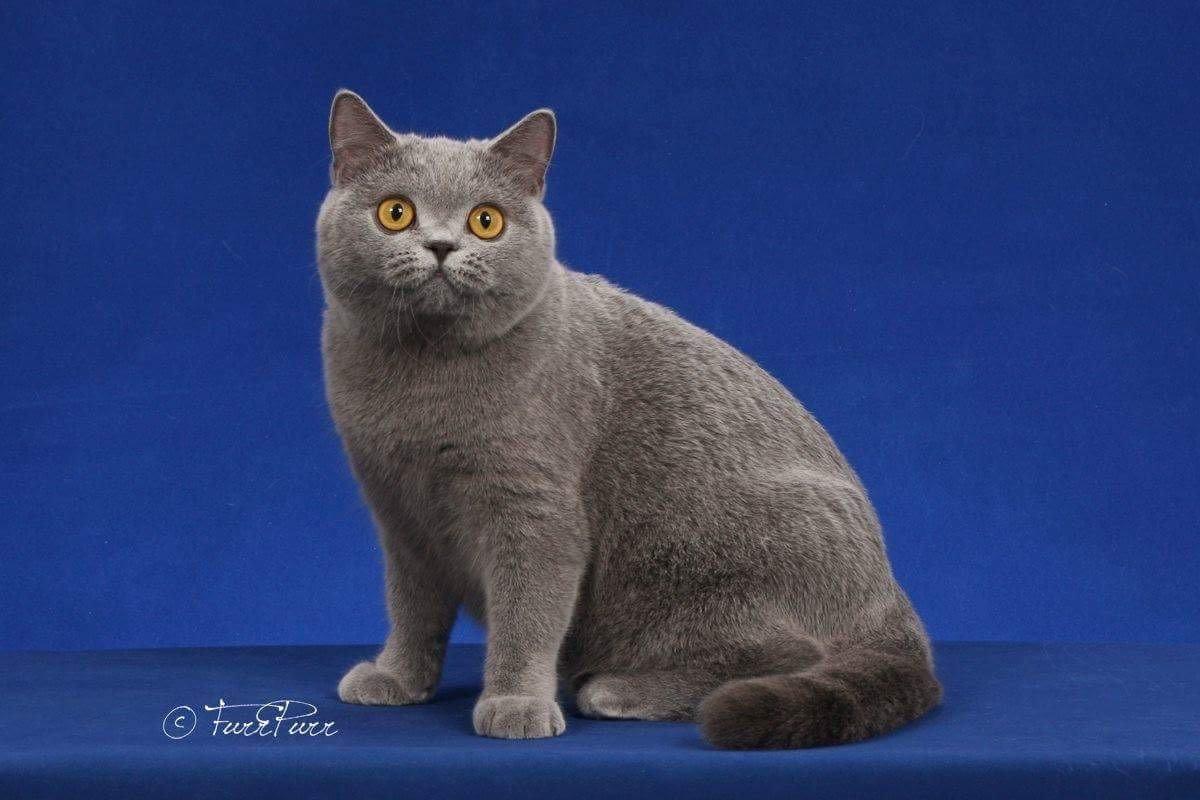 Natural Feline Breeders - Feline Instincts