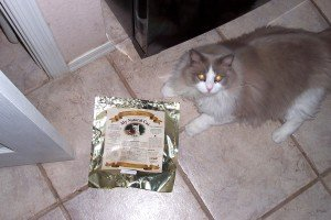 homemade raw meat cat food diet