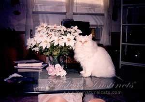 about-feline-instincts-raw-meat-cat-food-caesar