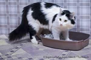 Natural Constipation Cures For Cats