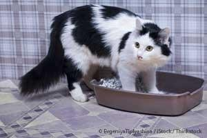Natural Cures For Constipation In Cats