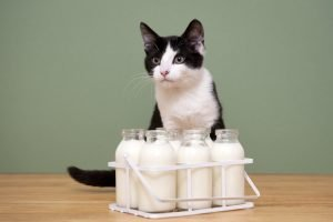 feline arw diet premix