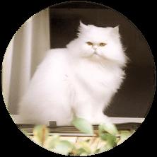 feline instincts bali