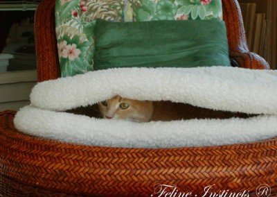 Caesar hiding from and looking for Alex