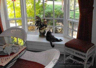 Alex in Bay window for front yard bird watch duty.
