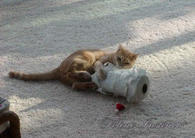 Caesar and his favorite toy since he was a kitten