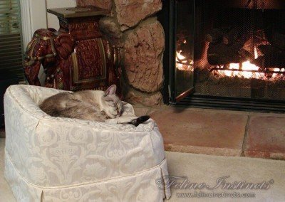 King Ramses loved being by the fire place.