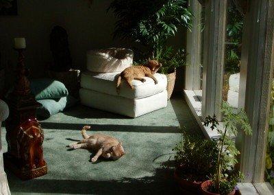 Caesar and King Tut enjoying the sun shine while grooming