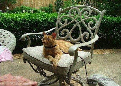 King Tut loved the back yard