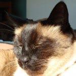 feline-instincts-raw-meat-diet-CRF-success-stories