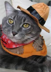 feline-instincts-raw-meat-diet-FUS-success-stories