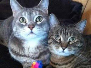 feline-instincts-raw-meat-diet-IBD-success-stories