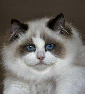 natural cat breeders